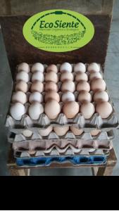 Huevos 100% Criollos