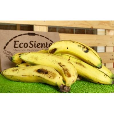 El banano
